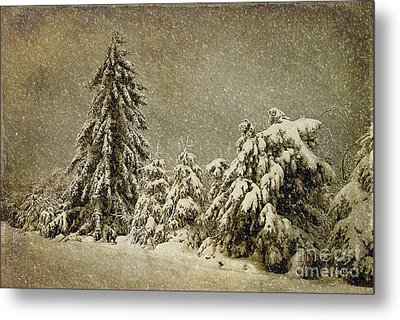 Winter's Wrath Metal Print by Lois Bryan