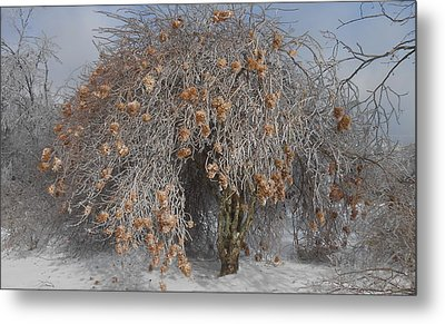 Wintertime Snowball Bush Tree Metal Print