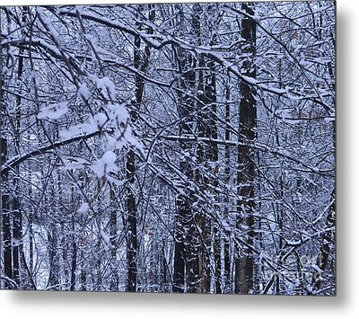 Wintery Day In Maryland Metal Print by Emmy Marie Vickers