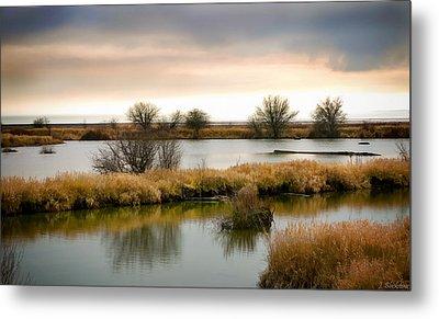 Metal Print featuring the photograph Wintery Wetlands by Jordan Blackstone
