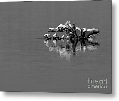 Wisconsin River Metal Print by Steven Ralser