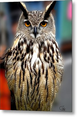 Wise Forest Mountain Owl Spain Metal Print