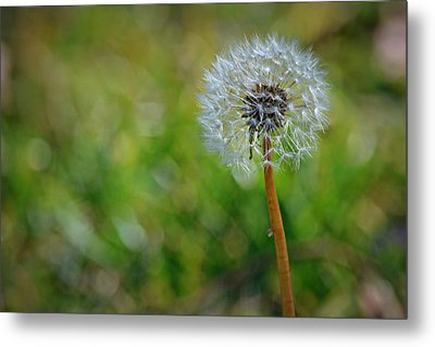 Wish And A Dream Metal Print by Mary Zeman