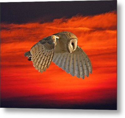 Wishful Thinking Metal Print by Paul Scoullar