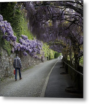 Wisteria And Plaid Metal Print by Colleen Williams