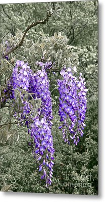 Wisteria Blossom Clusters Abstract Metal Print by Byron Varvarigos
