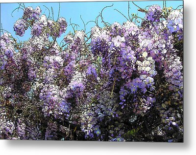 Metal Print featuring the photograph Wisteria - Fun Version by Jodie Marie Anne Richardson Traugott          aka jm-ART