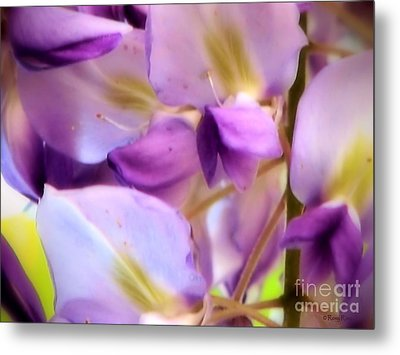 Metal Print featuring the photograph Wisteria Kisses by Roxy Riou