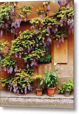 Wisteria On Home In Zellenberg 4 Metal Print by Greg Matchick