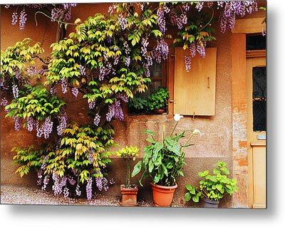 Wisteria On Home In Zellenberg France Metal Print by Greg Matchick