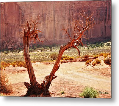 Metal Print featuring the photograph Witch Way Did They Go? by Sylvia Thornton