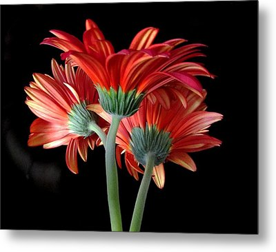 With Love Metal Print by Brenda Pressnall