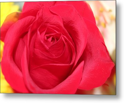 Metal Print featuring the photograph With Love by Judy Palkimas