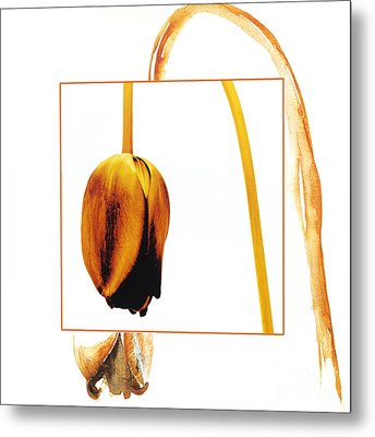 Withered Tulip Flower. Vintage-look Metal Print by Bernard Jaubert