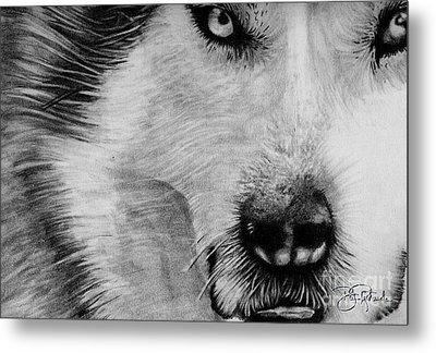 Wolf Metal Print by Bill Richards