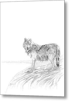 Wolf Metal Print by Carl Genovese