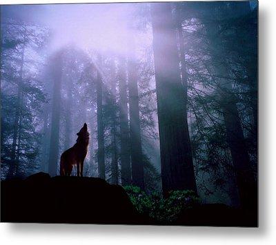 Wolf In The Woods Metal Print