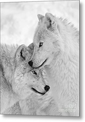 Wolf Love Black And White Metal Print