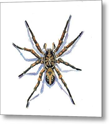 Wolf Spider Metal Print by Katherine Miller