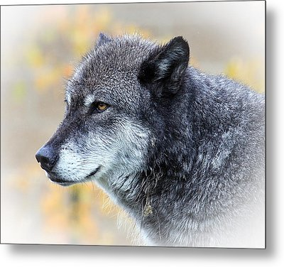 Metal Print featuring the photograph Wolf by Steve McKinzie