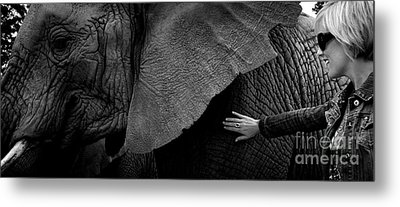 Metal Print featuring the photograph Woman Touching An Elephant by Michael Edwards