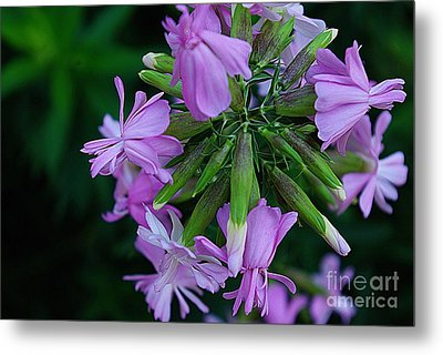 Metal Print featuring the photograph Wonderful Morning Flower by John S