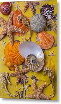 Wonderful Sea Life Metal Print