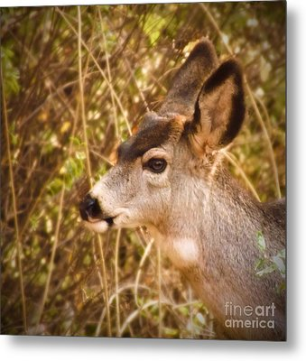 Wondering Deer Metal Print by Kimberly Maiden