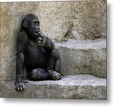 Metal Print featuring the photograph Wondering What To Do Next by Gary Neiss