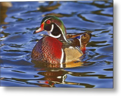 Metal Print featuring the photograph Wood Duck  by Brian Cross