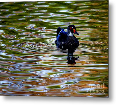 Metal Print featuring the photograph Wood Duck Reflections by John F Tsumas