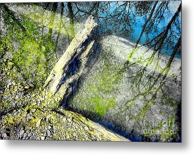 Wood Reflections Metal Print by Olivier Le Queinec