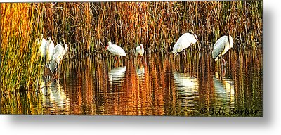 Wood Storks And 2 Ibis Metal Print by Bill Barber