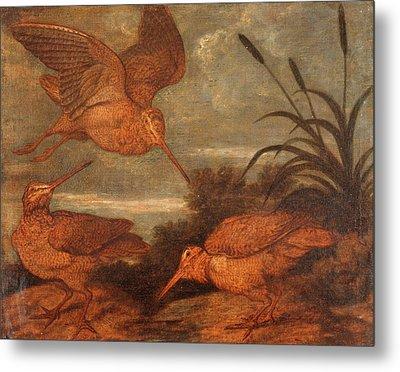 Woodcock At Dusk, Francis Barlow, 1626-1702 Metal Print