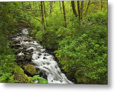 Wooded Stream In The Spring Metal Print