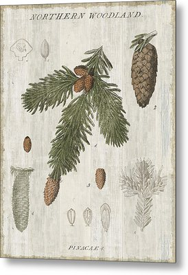 Woodland Chart V Metal Print by Sue Schlabach