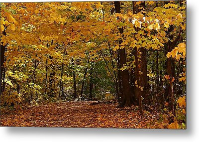 Woodland Path Metal Print by Bruce Bley