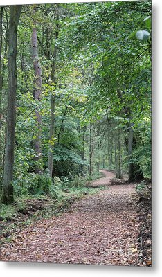 Woodland Path Metal Print by David Grant