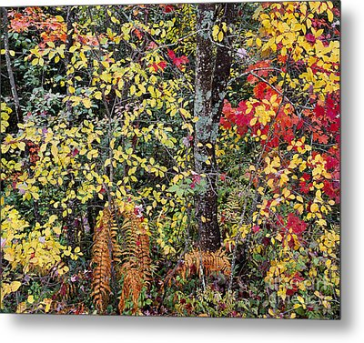 Woodland Tapestry Metal Print by Alan L Graham