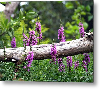 Woodland Treasures Metal Print