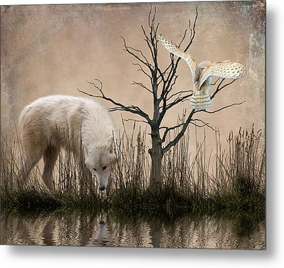 Woodland Wolf Reflected Metal Print by Sharon Lisa Clarke