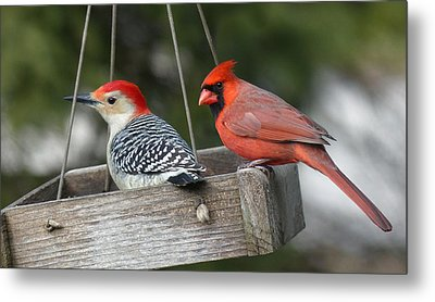 Woodpecker And Cardinal Metal Print by John Kunze