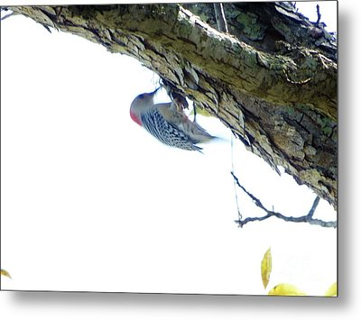 Woodpecker In A Tree Metal Print by Marie Bulger