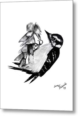 Metal Print featuring the drawing Woodpecker by Terry Frederick