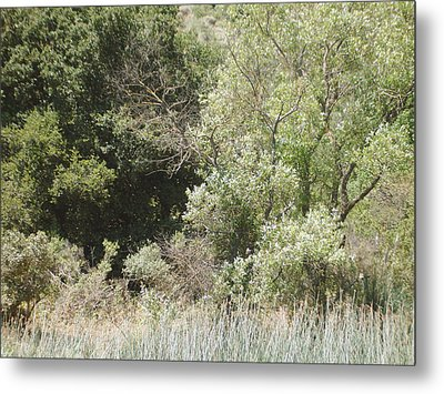Metal Print featuring the photograph Woods By The Lake by Hiroko Sakai