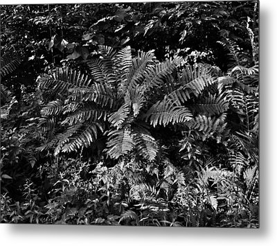 Wood's Ferns  Metal Print
