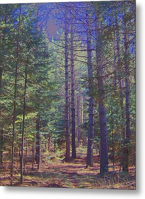 Woods II Metal Print by Shirley Moravec