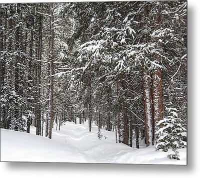 Woods In Winter Metal Print by Eric Glaser