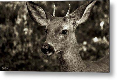 Woodside Deer Metal Print