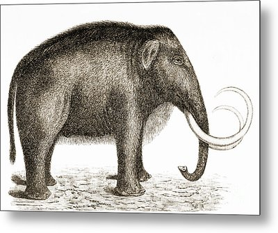 Woolly Mammoth Metal Print by British Library